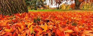 valcor-syndicat-dechets-cornouaille-compostage-feuilles-rouges-1